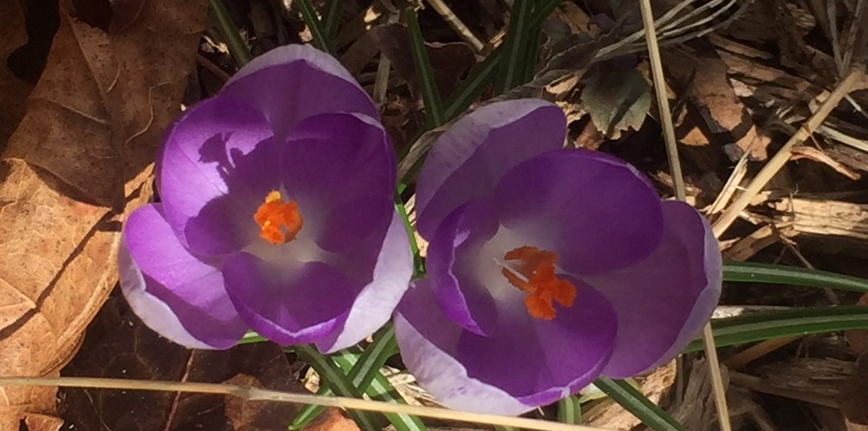 purple, white and orange flowers