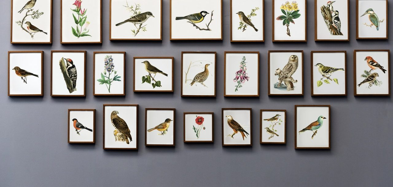 pictures of birds on the wall