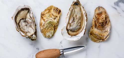 Shucked Oysters and Knife in Cape Cod