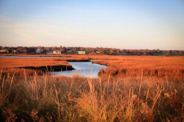 A beautiful salt marsh in Hyannis Port in winter. The sea grasses that are blonde in summer turn orange , then brown in winter. All under a crisp, clean, clear blue sky, Typical Cape homes in the distance