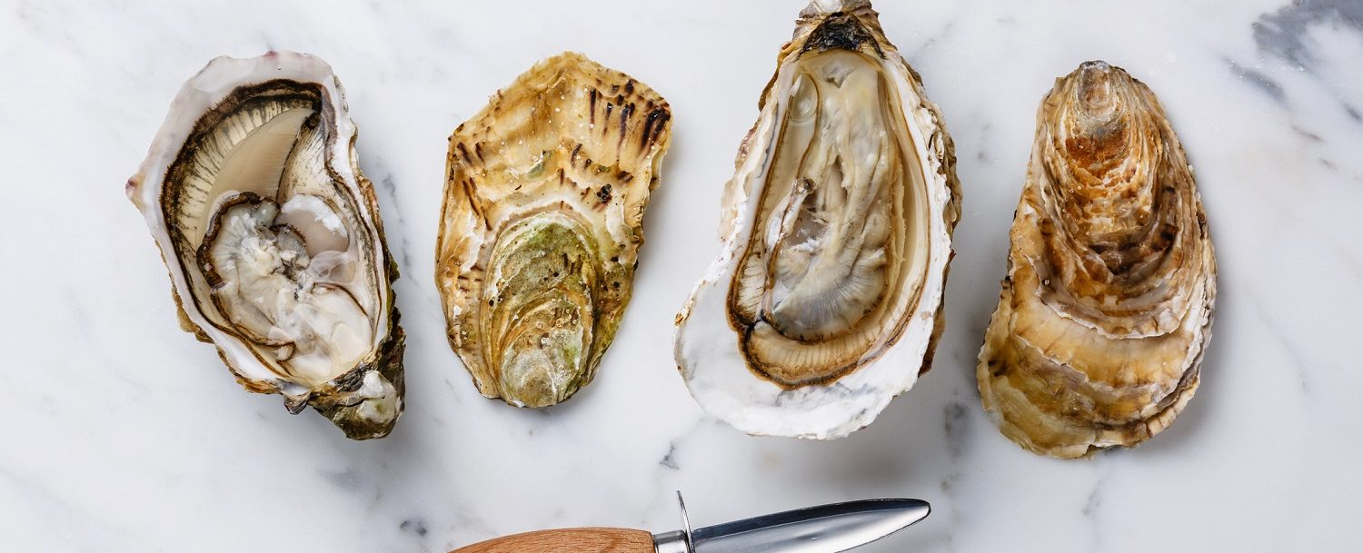 Shucked Oysters and oyster knife