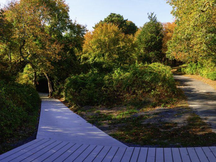 Autumn forest landscape on Cape Cod.